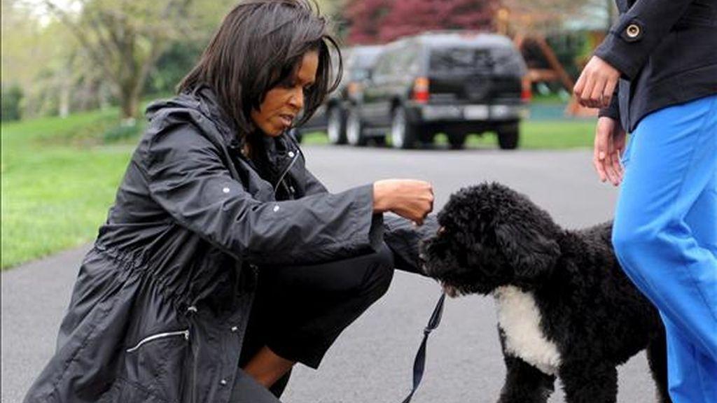 """La primera dama estadounidense, Michel Obama, juega en los jardines de la Casa Blanca en Washington (EEUU), con su nueva mascota """"Bo"""", un perro de aguas portugués, obsequiado a la familia Obama por el senador Edward Kennedy. EFE"""