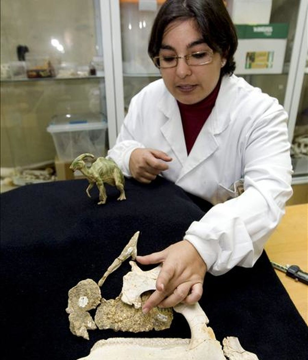 Penélope Cruzado, paleontóloga del grupo de investigación Aragosaurus-IUCA de la Universidad de Zaragoza muestra los fósiles de la cabeza de un dinosario que científicos de Zaragoza, Asturias y el País Vasco han descubierto en la localidad de Arén (Huesca). Se trata de una especie de dinosaurio perteneciente al grupo de los hadrosáuridos (picos de pato), que se creía que nunca había existido en Europa. EFE