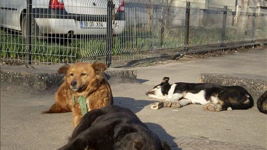 Perros abandonados. EFE/Archivo