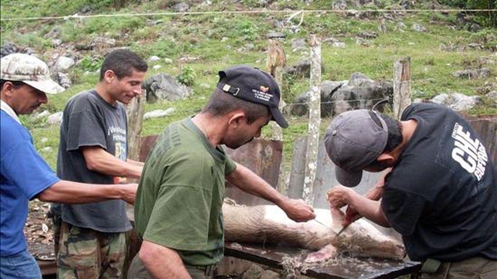 """Fotografía disponible en la que se observa a los guerrilleros de las FARC alias """"Jaime Canaguaro"""" (2 d) y alias """"Ciro Rayo"""" (d) mientras preparan un cerdo en el centro de instrucción de Jesús Santrich, en la vereda de Sorotaima (Venezuela). EFE"""
