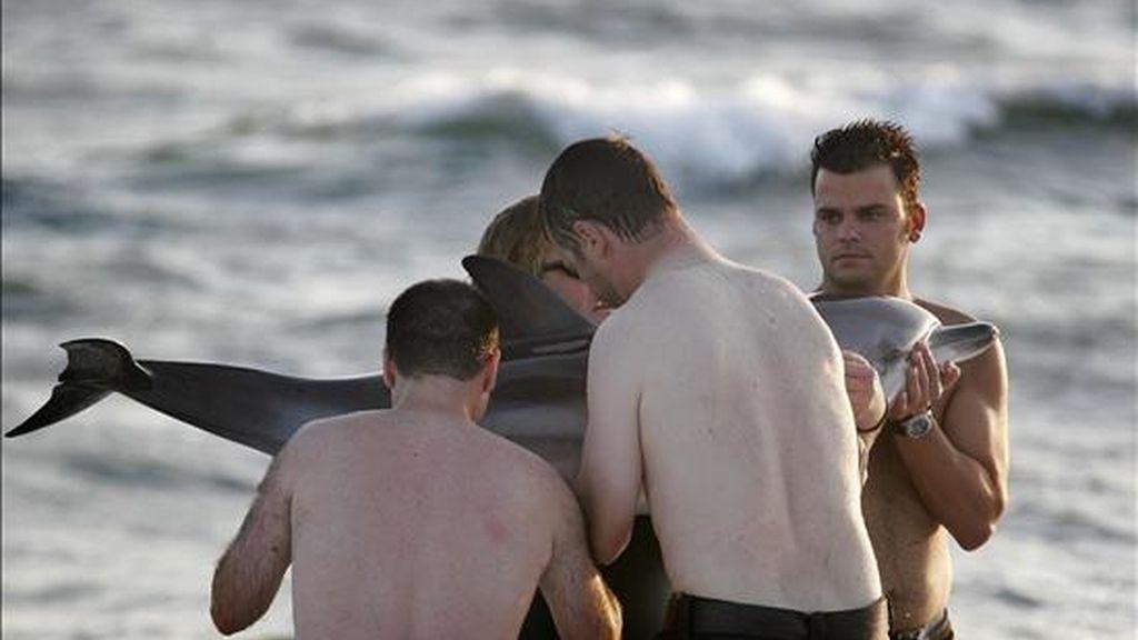 Unos bañistas recogen a un delfín varado en una playa de Almería. EFE/Archivo