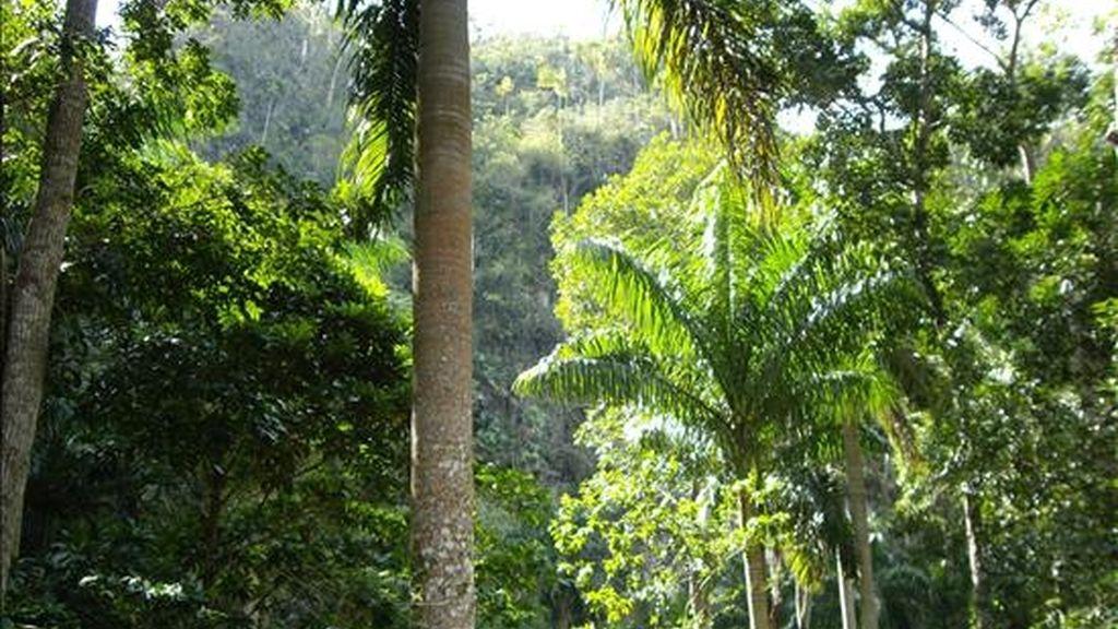 Vista del Parque Nacional Valle de Viñales, enclavada en  la Sierra de los Órganos de la cordillera de Guaniguanico (Cuba) .EFE/Archivo