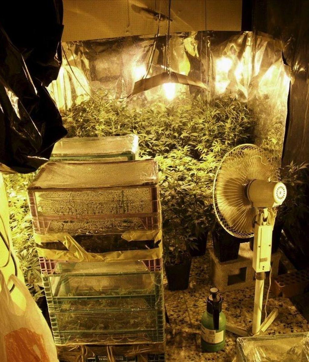 Agentes de la Ertzaintza encontraron una plantación de marihuana en un piso de Ermua al que acudieron para auxiliar a una comisión judicial que iba a proceder a desahuciar al joven que residía en la vivienda. EFE/Archivo