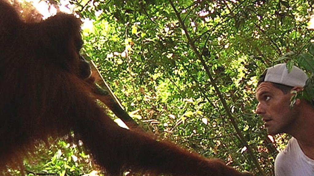 Frank le da la mano a un orangután