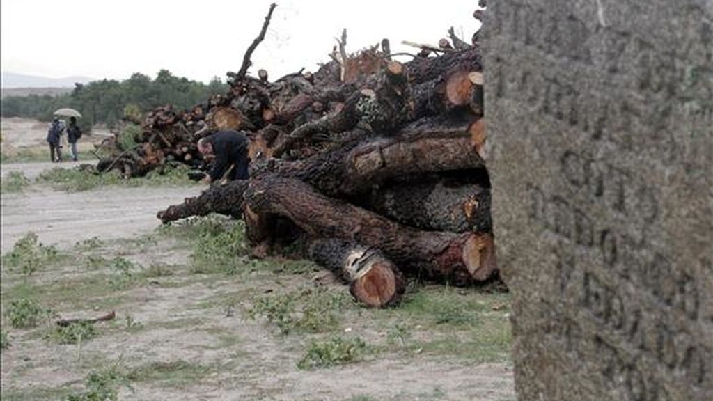 Cientos de troncos de pinos centenarios cortados y apilados en octubre de 2006 en el lugar elegido para llevar a cabo una macrourbanización en Villanueva de Gómez (Ávila). EFE