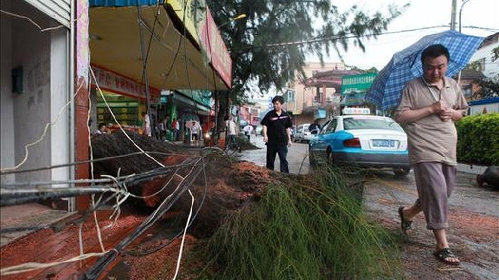 Un hombre camina al lado de un árbol caído hoy, 20 de septiembre de 2010, después de un tifon en Xiamen (China). El fenómeno Fanapi, el más poderoso en lo que va del año, aterrizó en la región este lunes, forzando a las escuelas a cerrar y a las aerolíneas a cancelar los vuelos. EFE
