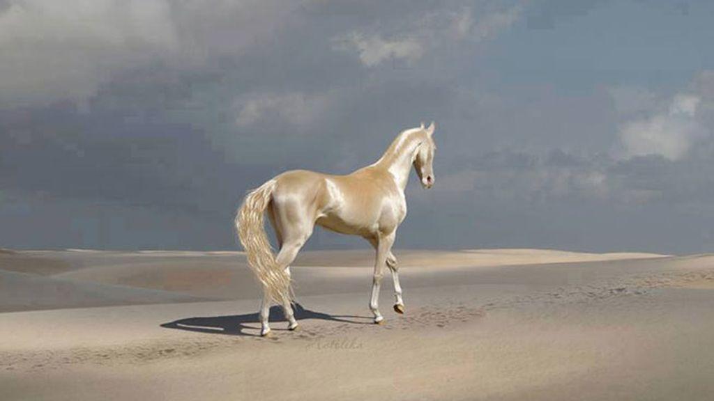 El caballo más bonito del mundo, una especie con solo 1.250 ejemplares en el mundo