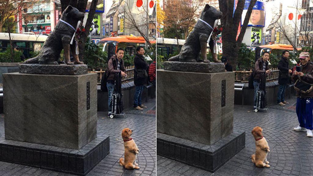El posado de un perro le quita el protagonismo a Hachikō, el can más fiel