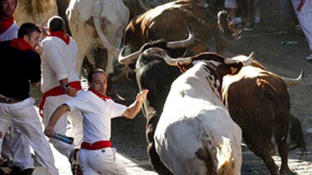 Los toros de Peñajara han realizado un encierro limpio. Vídeo: Informativos Telecinco.