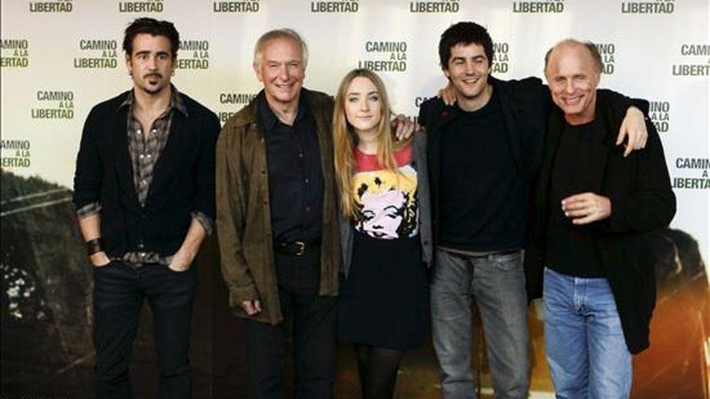 """El prestigioso realizador australiano Peter Weir (2i), junto a los actores de su nueva película, """"Camino a la libertad"""", el estadounidense Ed Harris (d), el británico Jim Sturgess (2d), y los irlandeses Saoirse Ronan (c) y Colin Farrell (i), durante la presentación hoy de la cinta en Madrid. EFE"""