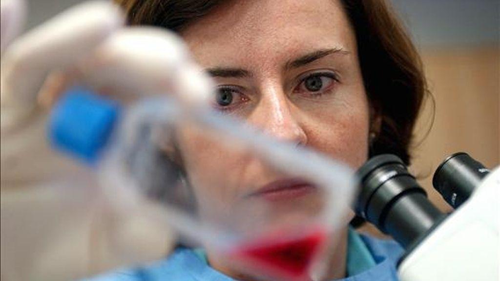 La sangre de cordón umbilical puede ser requerida en casos de leucemias agudas, hemopatías malignas, aplasias medulares, inmunodeficiencias congénitas y errores congénitos del metabolismo. EFE/Archivo