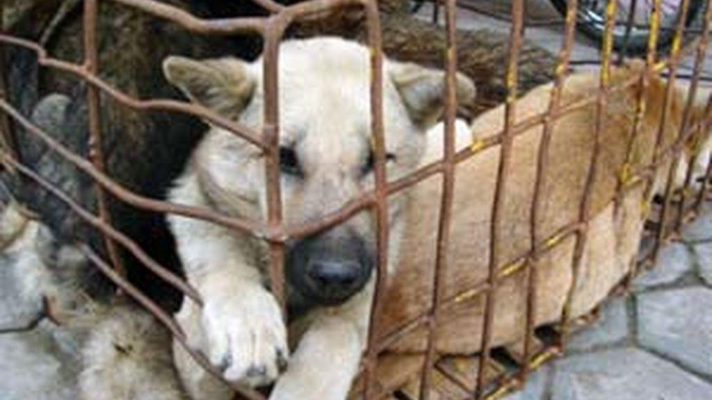 Los hechos juzgados se remontan a diciembre de 2008, cuando el acusado decidió deshacerse de su perro de una forma extremadamente cruel.