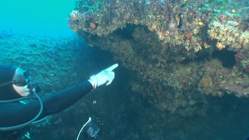 Calleja se sumerge en las profundidades de Menorca en busca del coral rojo