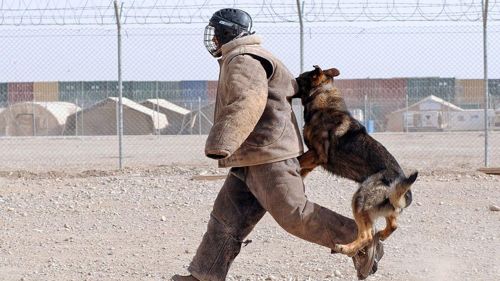 perro ataque