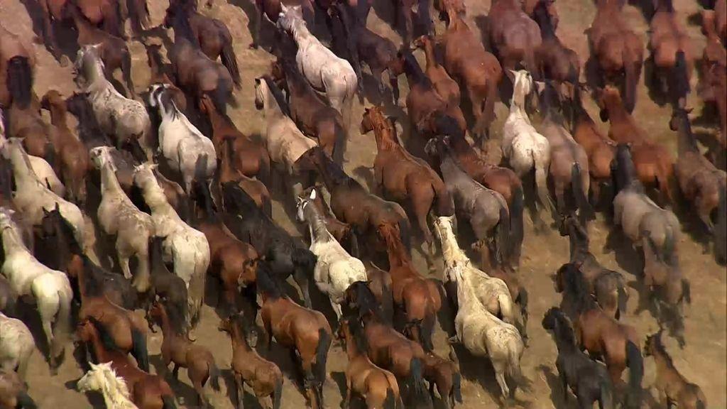 Cuando Cristóbal Colón viajó hasta Doñana para conseguir todos sus caballos