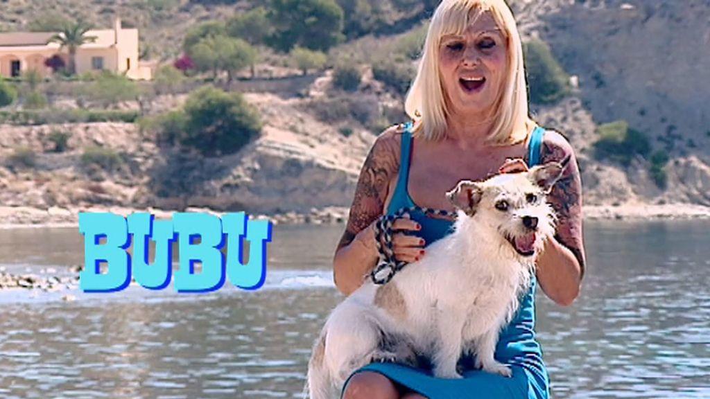Se busca novia para el celoso Bubu