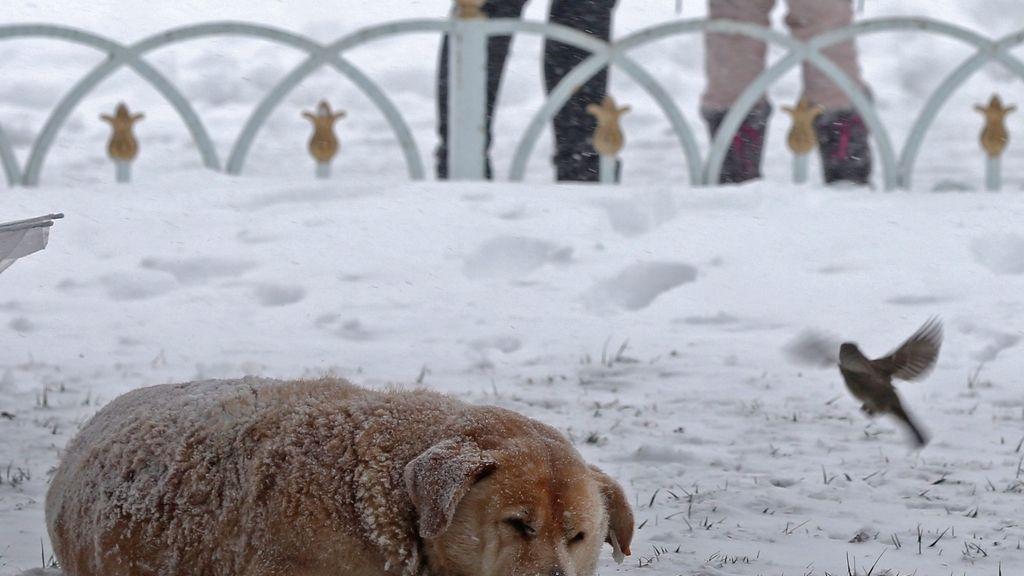Nieve en Turquía