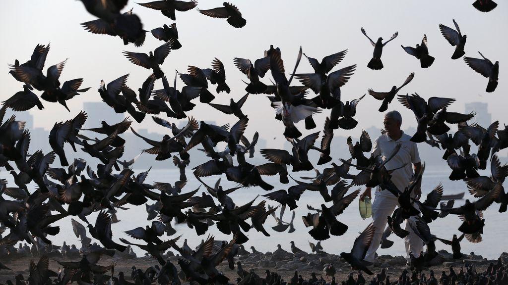 Las palomas invaden las zonas costeras de oriente