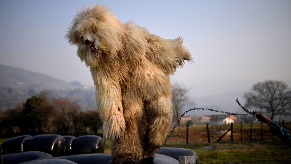 Un hombre vestido de oso durante 'La Vijanera'