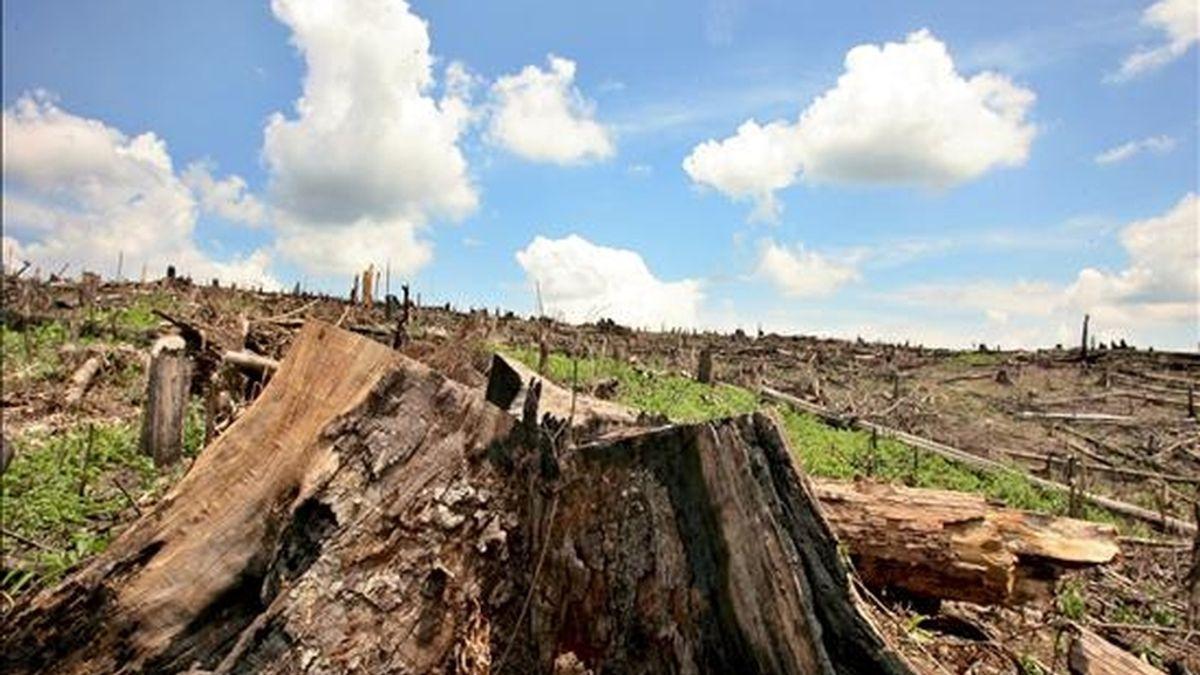 El Deter calcula la deforestación en la Amazonía con base en las imágenes obtenidas por un sensor WFI del satélite chino-brasileño de recursos terrestres CBERS con resolución espacial de 250 metros. EFE/Archivo