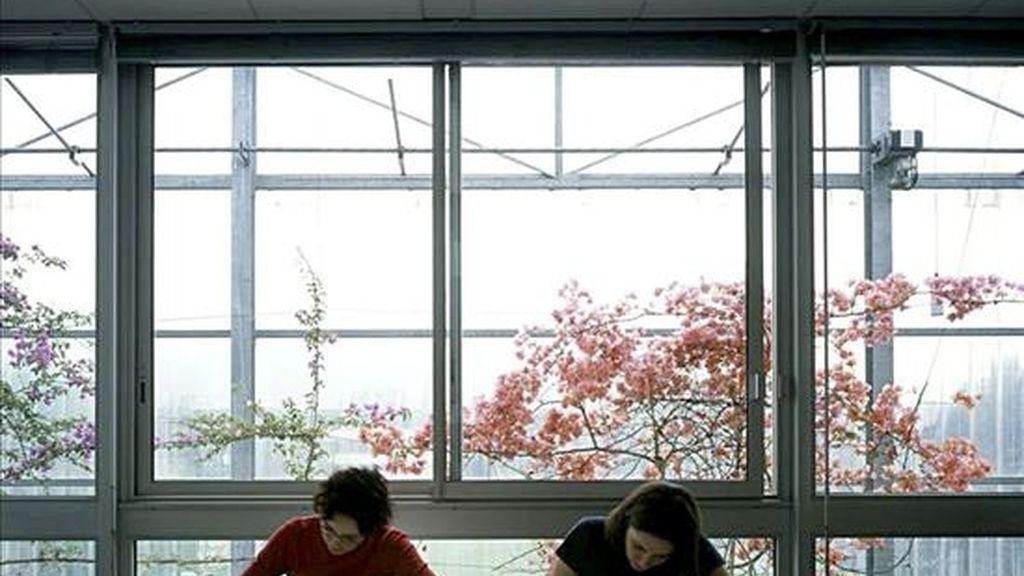 En la imagen, interior de la Universidad de las Artes y las Ciencias Humanas de Grenoble (2001) y de su muro-invernadero, uno de los elementos característicos del arte bioclimático de los arquitectos Lacaton & Vassal. EFE