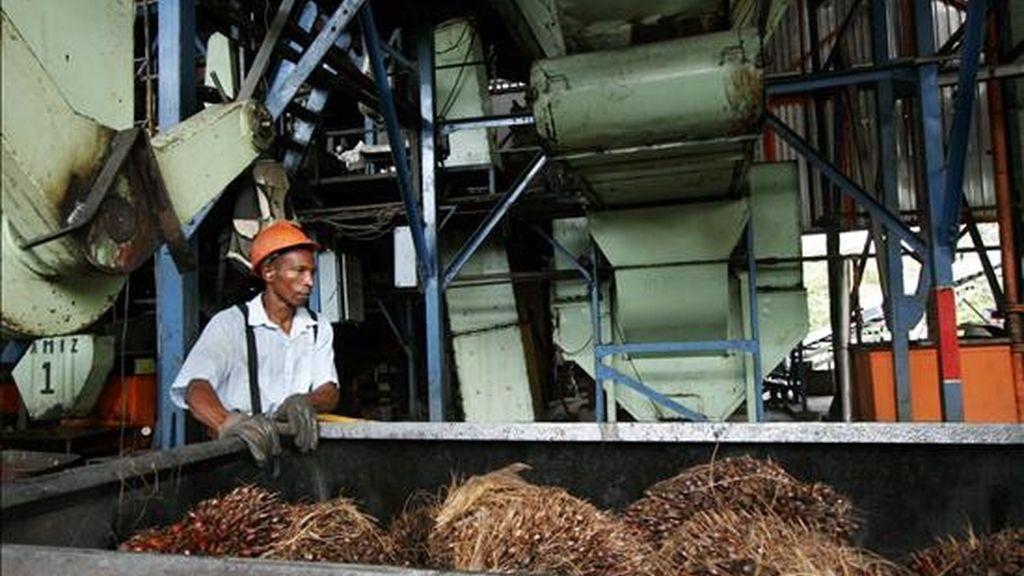 La caribeña región colombiana de Santa Marta se ha transformado en un espacio de esperanza para los campesinos que desde la pobreza han pasado a ser microempresarios con el cultivo de palma de aceite, la materia prima de los biocombustibles. EFE