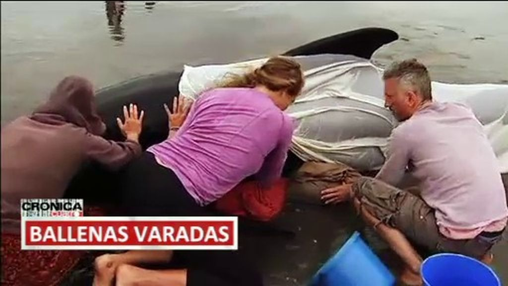 Ballenas varadas, un accidente aparatoso y una lluvia de árboles: imágenes de impacto