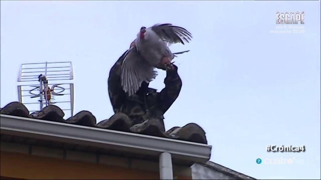 Cazalilla tira a su pava desde un tejado... y agrede a nuestro cámara