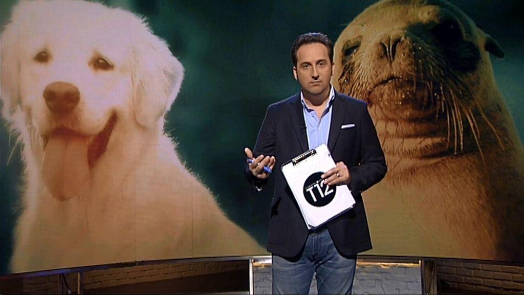 Perros, caballos, leones... la fauna que ayuda a los enfermos mentales y motores