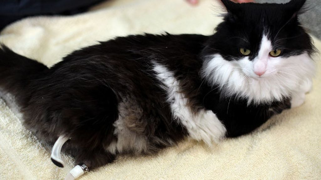 Pooh, el gato biónico, gato con patas biónicas