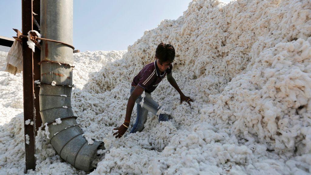 Trabajo infantil en una procesadora de algodón en Gujarat, India