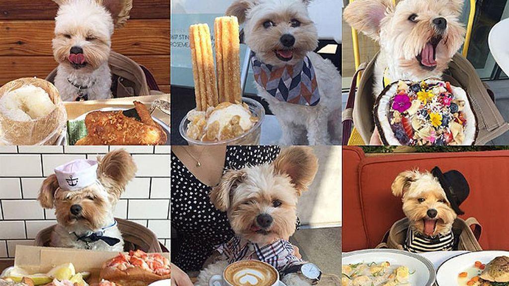 De perro callejero a gourmet