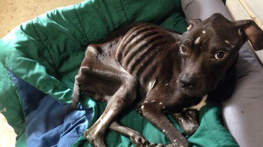 Ace, el perro que saltó por la ventana de una caravana para salvar su vida