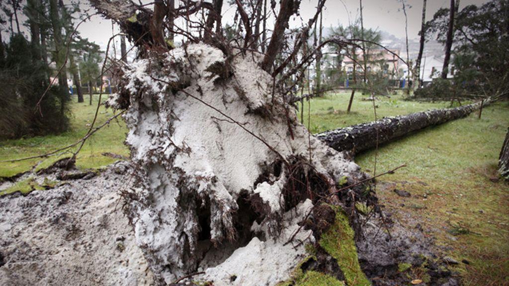 Muere un anciano en Muras al resbalar con unas ramas de un árbol caído