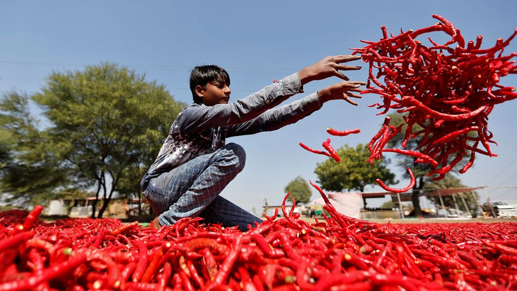 Una granja de la India se tiñe de rojo