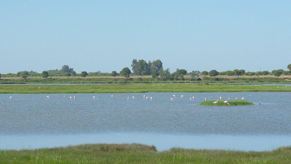 Parque Nacional de Doñana (Huelva)