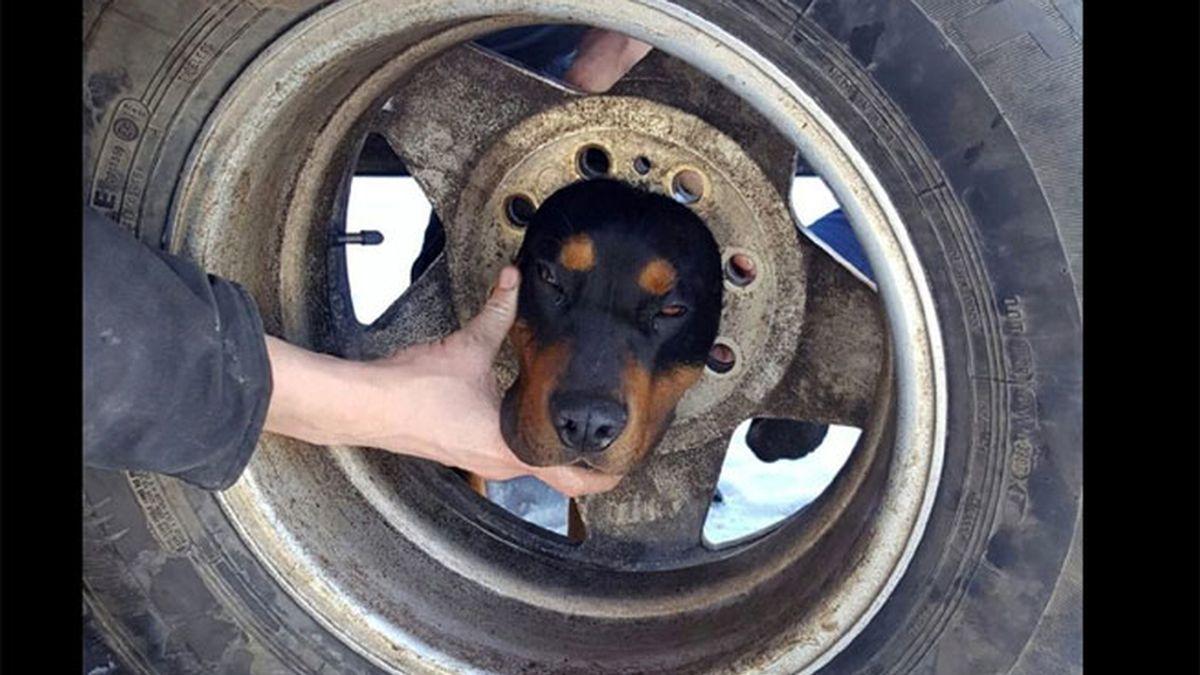 Un perro es rescatado por los bomberos al quedarse atrapado por la cabeza