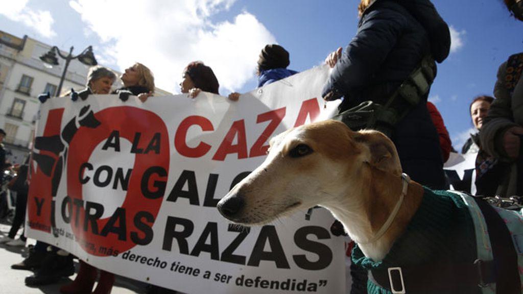 Una manifestación pide en Madrid que se prohíba la caza con perros