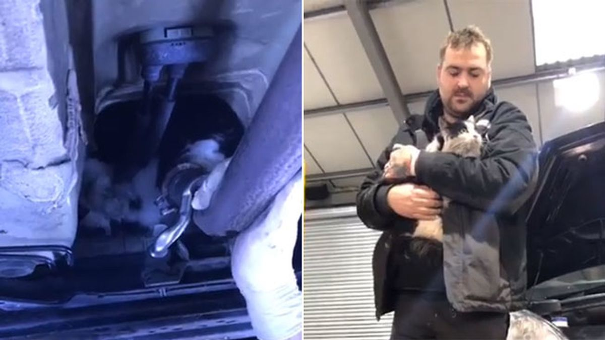 Rescatan a un gato atrapado en el motor de un coche durante 12 horas