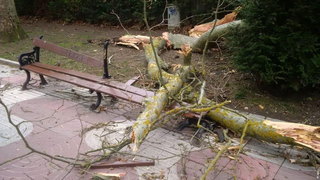 Efectos del temporal de viento en Vitoria