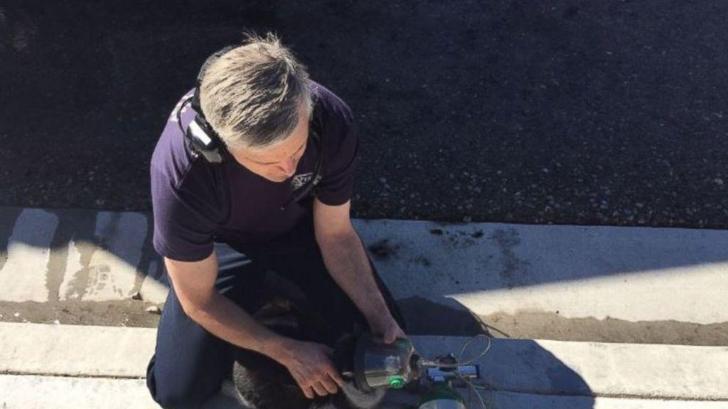 Los bomberos de Las Vegas reaniman a un gato