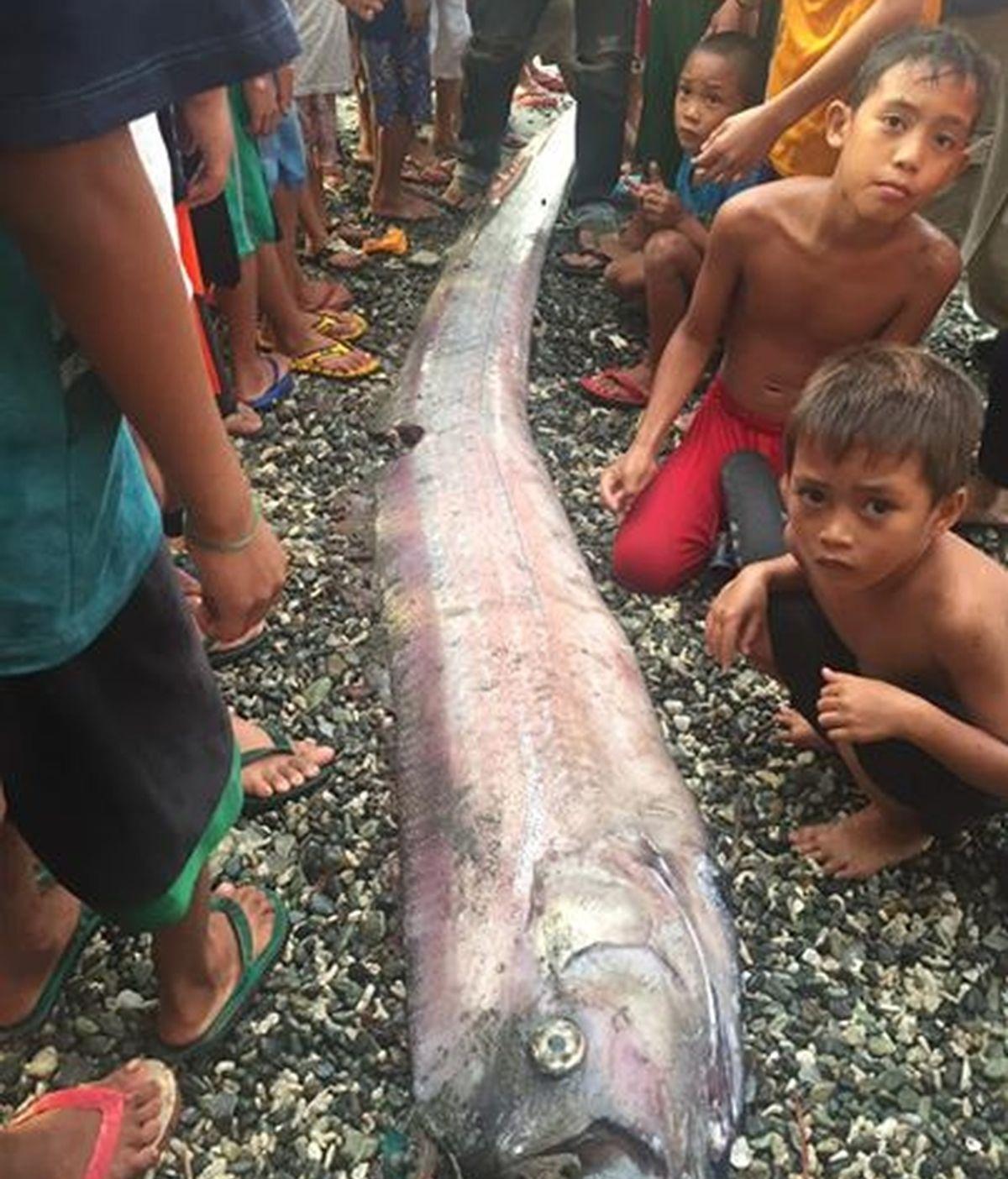 pez Filipinas