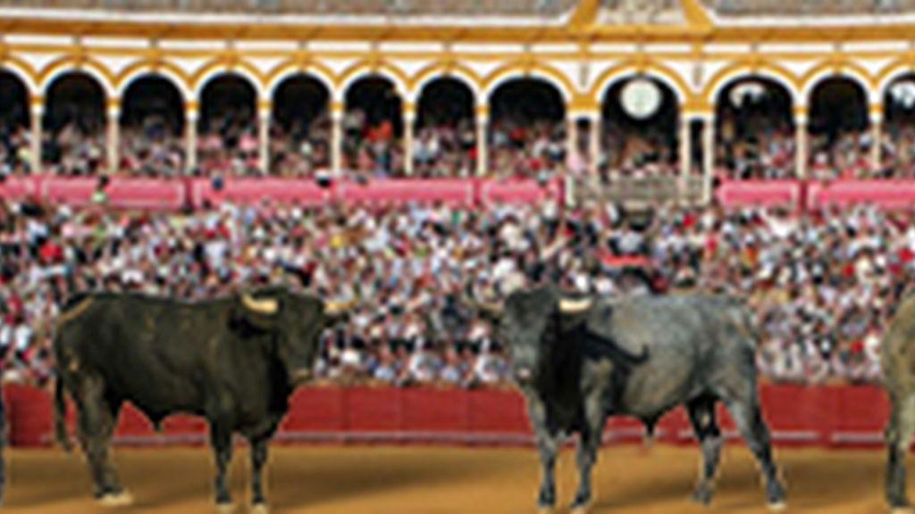 """""""Victorinos"""" entipados y de vareada romana para el """"duelo"""" Morante-Cid"""
