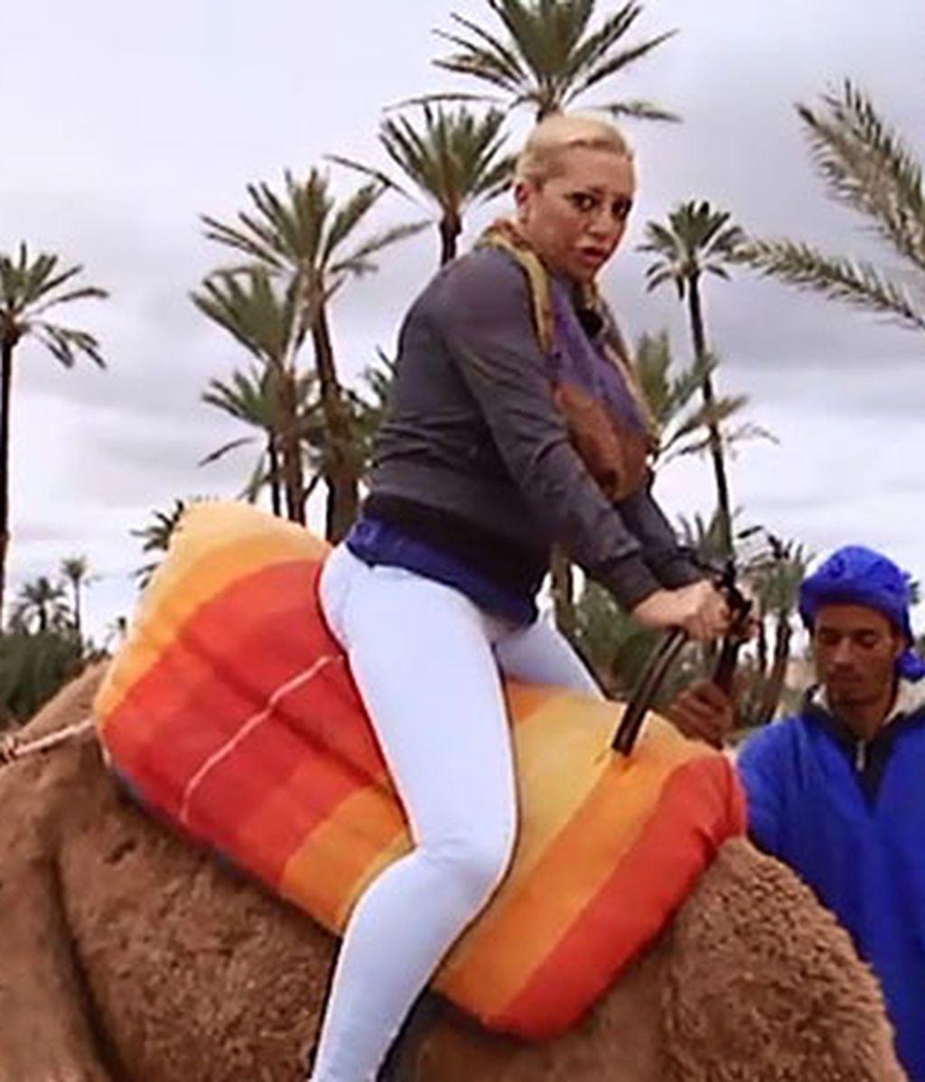 Camello y belén