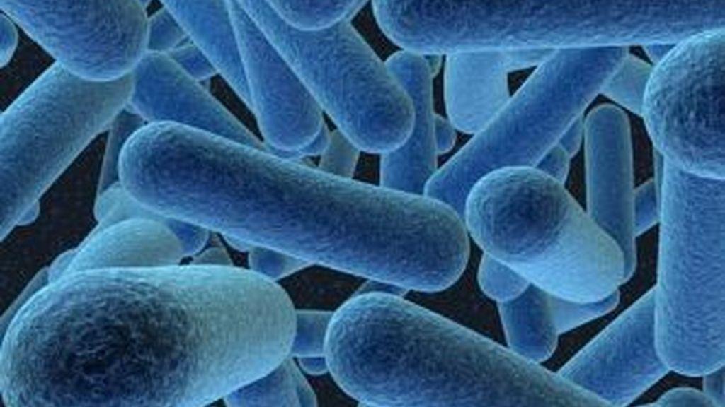 Un grupo de científicos chinos ha conseguido usar una bacteria como contenedor de datos. Foto archivo superbacteria resistente a los antibióticos.