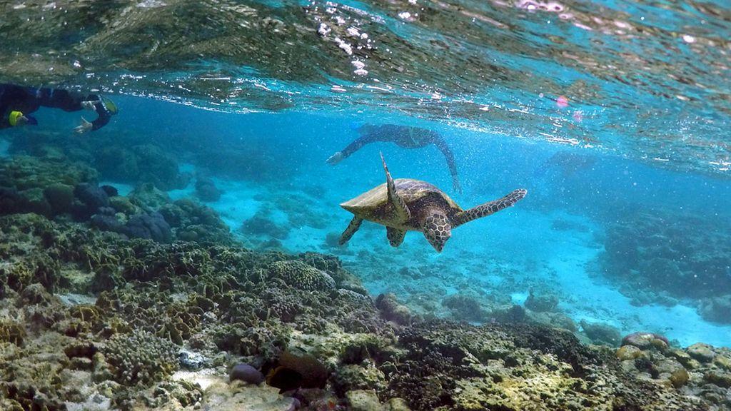 Bucean entre tortugas
