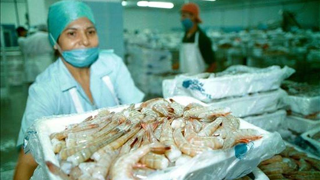Imagen de una empacadora de productos de mar en el puerto de Mazatlán, estado de Sinaloa (México). EFE/Archivo