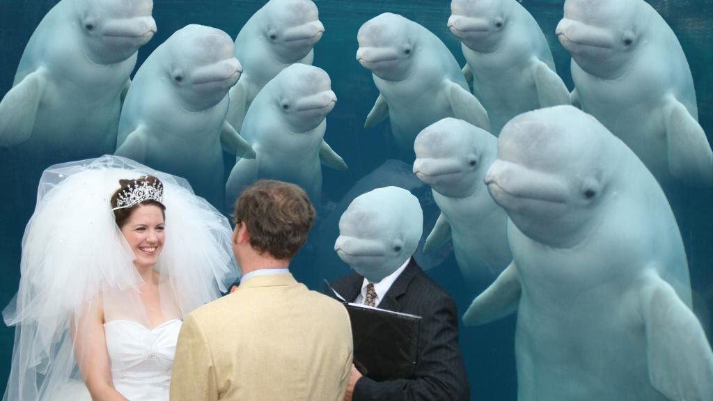 Imagen beluga