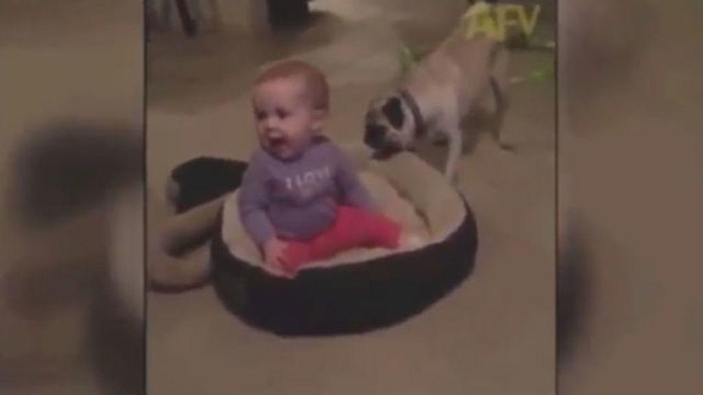 La tierna pelea entre un perro y un bebé por una cama se convierte en viral