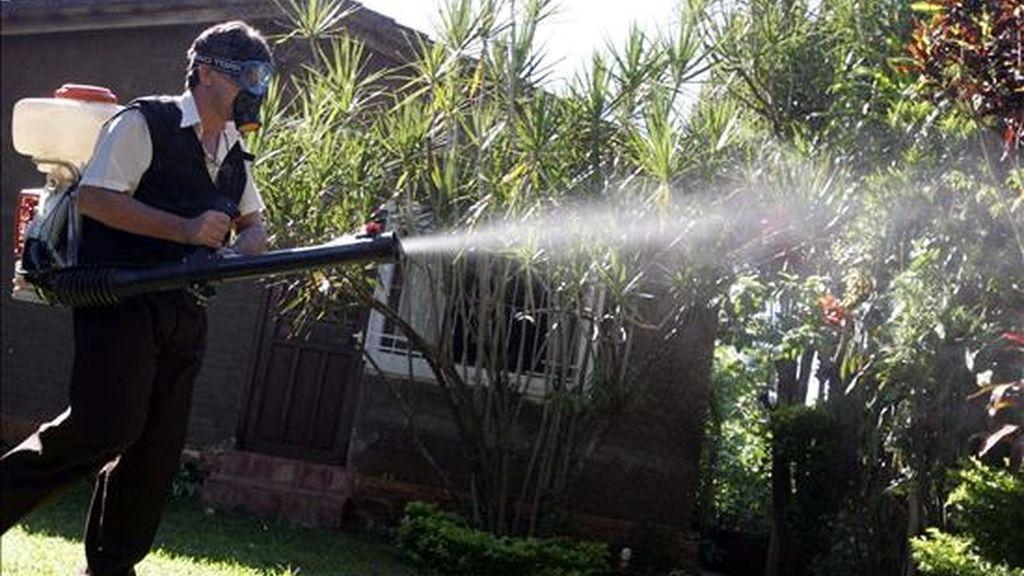El consejo regional de Ucayali reportó el desabastecimiento de equipos humanos y material para combatir la propagación de esta enfermedad, cuyo mosquito transmisor, el Aedes Aegypti, se reproduce con mayor facilidad en zonas anegadas. EFE/Archivo